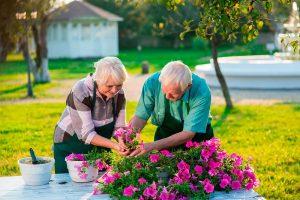 The Surprising Health Benefits of Garden Landscaping